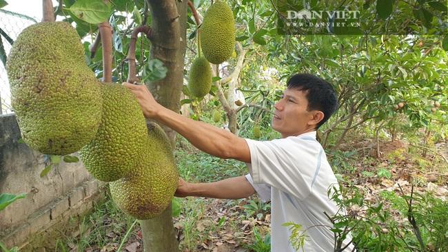 Thái Bình: Ngày bận thổi hồn cho gỗ, chiều chăm vườn cây ăn quả, 8x có thu nhập khủng   - Ảnh 4.