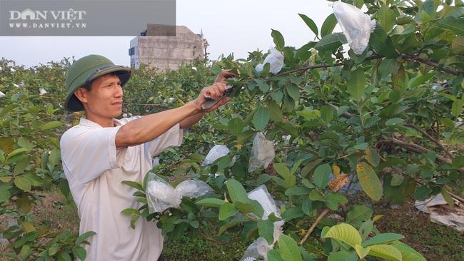 Thái Bình: Ngày bận thổi hồn cho gỗ, chiều chăm vườn cây ăn quả, 8x có thu nhập khủng   - Ảnh 2.