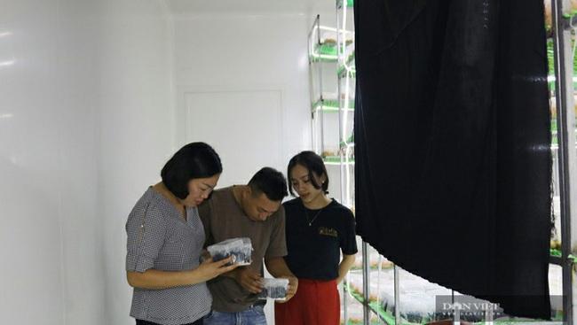Hà Nội: Trai trẻ là kỹ sư điện về quê trồng loài nấm gì mà bán 750.000 đồng/hộp, ai cũng muốn đến xem thử - Ảnh 5.