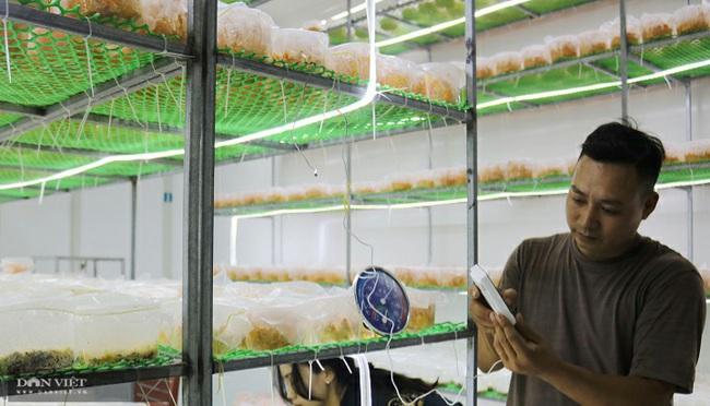 Hà Nội: Trai trẻ là kỹ sư điện về quê trồng loài nấm gì mà bán 750.000 đồng/hộp, ai cũng muốn đến xem thử - Ảnh 1.