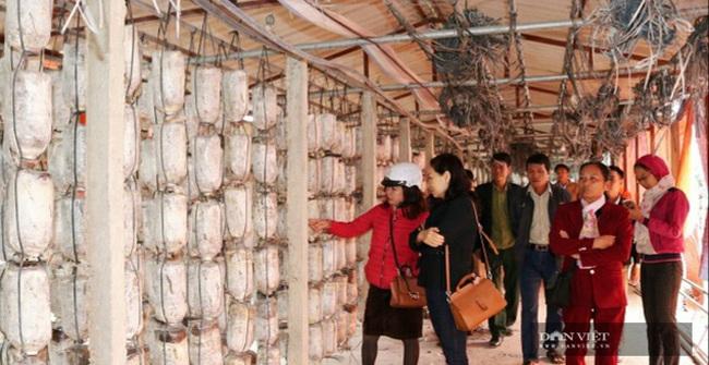Hà Nội: Trai trẻ là kỹ sư điện về quê trồng loài nấm gì mà bán 750.000 đồng/hộp, ai cũng muốn đến xem thử - Ảnh 4.