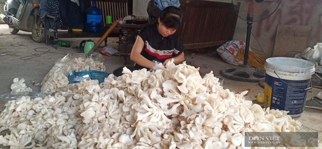 Hà Nội: Trai trẻ là kỹ sư điện về quê trồng loài nấm gì mà bán 750.000 đồng/hộp, ai cũng muốn đến xem thử - Ảnh 3.
