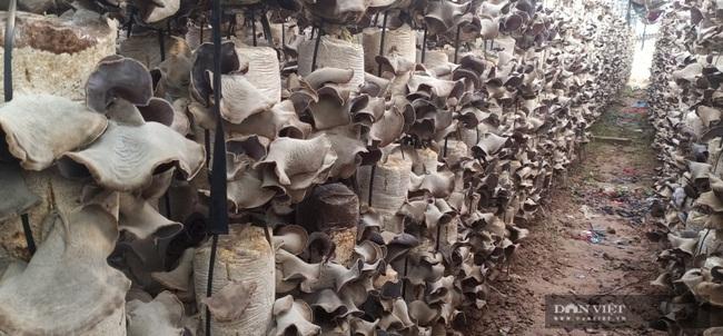 Hà Nội: Trai trẻ là kỹ sư điện về quê trồng loài nấm gì mà bán 750.000 đồng/hộp, ai cũng muốn đến xem thử - Ảnh 2.