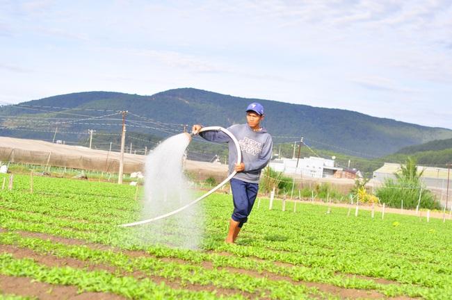Lâm Đồng có bao nhiêu ha sản xuất nông nghiệp hữu cơ mà muốn dẫn đầu cả nước? - Ảnh 1.