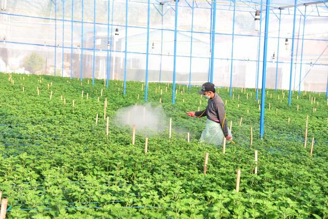 Lâm Đồng có bao nhiêu ha sản xuất nông nghiệp hữu cơ mà muốn dẫn đầu cả nước? - Ảnh 3.