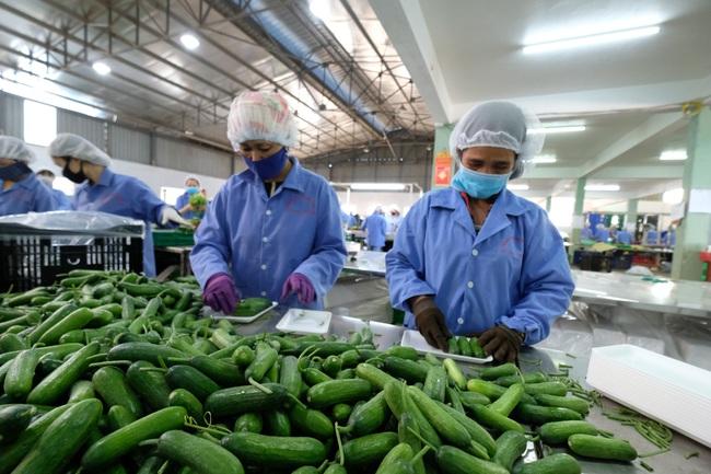 Lâm Đồng có bao nhiêu ha sản xuất nông nghiệp hữu cơ mà muốn dẫn đầu cả nước? - Ảnh 4.
