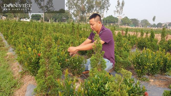 Thái Bình: Trồng bạt ngàn hoa, cây cảnh trên ruộng trũng bỏ hoang, 8x có cơ ngơi tiền tỷ - Ảnh 7.