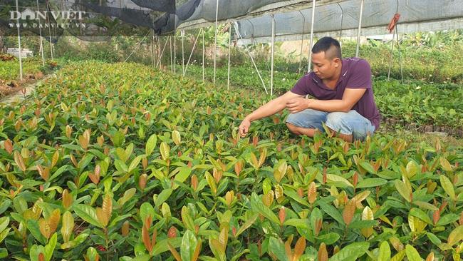 Thái Bình: Trồng bạt ngàn hoa, cây cảnh trên ruộng trũng bỏ hoang, 8x có cơ ngơi tiền tỷ - Ảnh 6.
