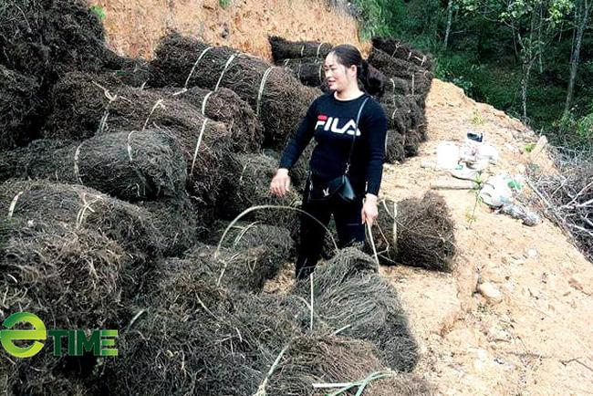 Trồng bán loại cây khô khốc mà nông dân ở đây thu từ 179 – 250 tỷ đồng/năm  - Ảnh 2.