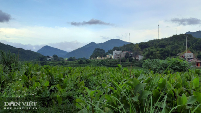 Từ củ dong riềng đến sản phẩm OCOP chủ lực của Quảng Ninh - Ảnh 1.