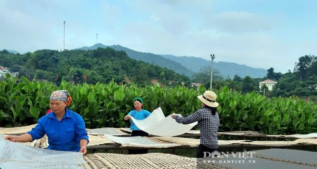 Từ củ dong riềng đến sản phẩm OCOP chủ lực của Quảng Ninh - Ảnh 2.