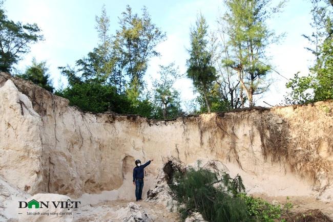 """""""Cát tặc""""phá nát rừng phi lao ven biển ở Ninh Thuận - Ảnh 1."""