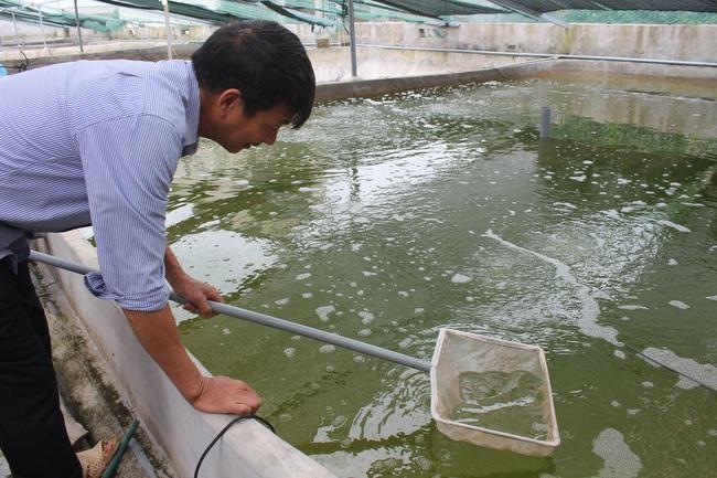 Thăm trang trại cung cấp tôm, cá sạch, thương lái mê tít cho thu hoạch tiền tỷ mỗi năm của lão nông Nam Định - Ảnh 3.