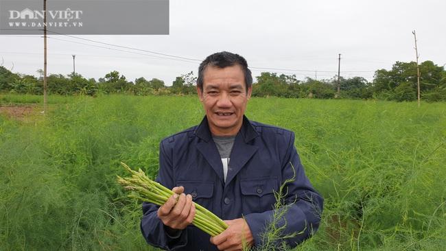 Nam Định: Ra giữa đảo trồng măng tây, lão nông bỏ túi hàng chục triệu đồng/tháng. - Ảnh 2.