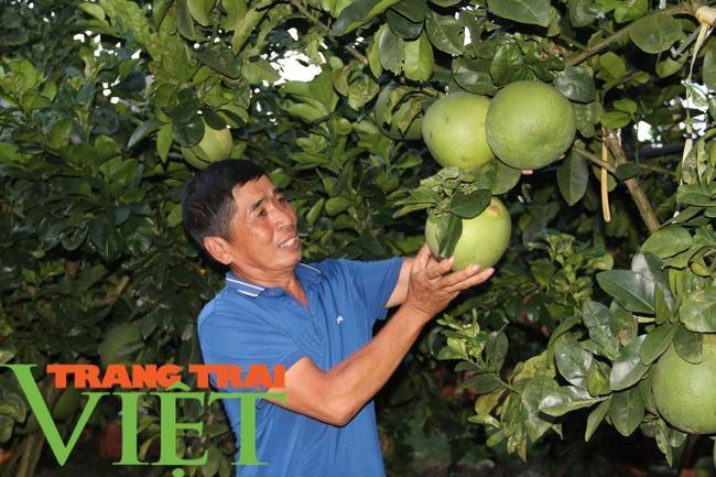Bỏ ngô về trồng bưởi Da Xanh, lão nông có cơ ngơi khang trang - Ảnh 5.