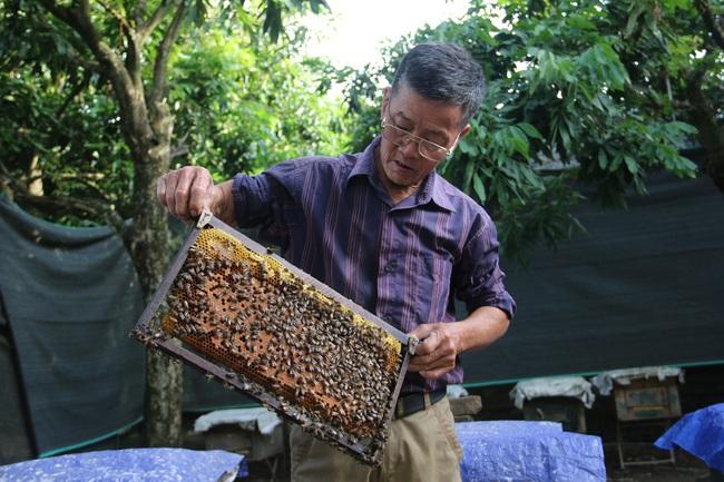 """Lão nông biến """"đoàn quân"""" ong thành... máy in tiền - Ảnh 1."""