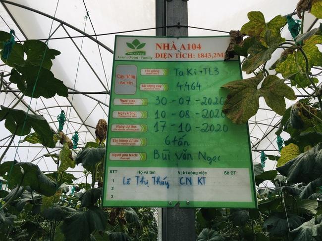"""Nông dân cùng doanh nghiệp """"đan tay"""" trồng dưa lưới thu lãi cao - Ảnh 6."""