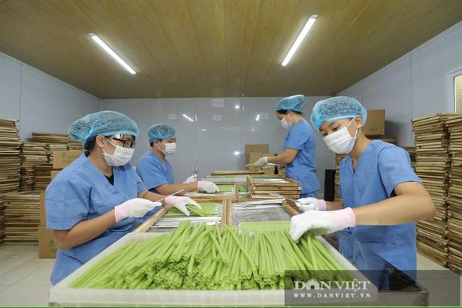 """Hà Nội: Nông dân 7X """"phù phép"""" rau, củ quả thành ống hút thân thiện môi trường, xuất khẩu đi Hàn Quốc, Đức - Ảnh 5."""