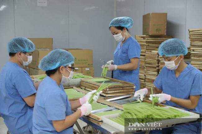 """Hà Nội: Nông dân 7X """"phù phép"""" rau, củ quả thành ống hút thân thiện môi trường, xuất khẩu đi Hàn Quốc, Đức - Ảnh 1."""