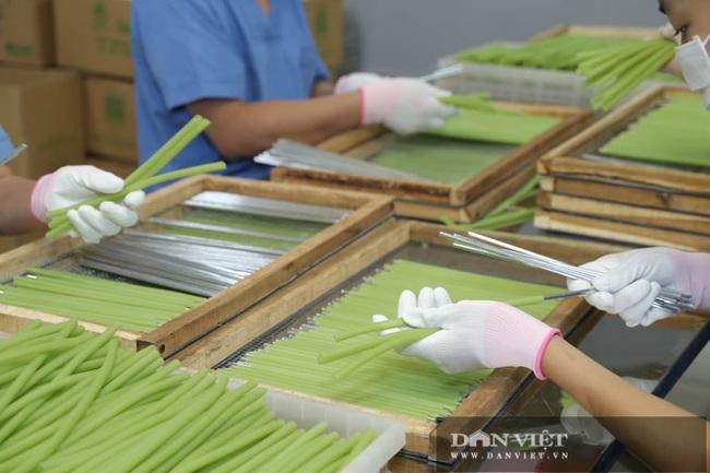 """Hà Nội: Nông dân 7X """"phù phép"""" rau, củ quả thành ống hút thân thiện môi trường, xuất khẩu đi Hàn Quốc, Đức - Ảnh 3."""