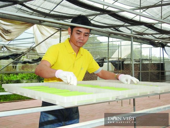 """Hà Nội: Nông dân 7X """"phù phép"""" rau, củ quả thành ống hút thân thiện môi trường, xuất khẩu đi Hàn Quốc, Đức - Ảnh 2."""