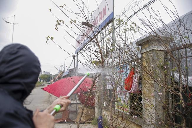 Đào Nhật Tân nở sớm xuống phố, người dân ngỡ như Tết Nguyên đán đang cận kề - Ảnh 8.
