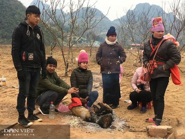 Sơn La: Cơ quan chức năng nói gì về chỉ đạo của Thủ tướng về cấm chặt đào rừng - Ảnh 4.