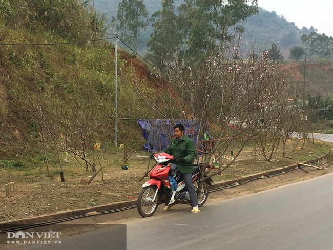Sơn La: Cơ quan chức năng nói gì về chỉ đạo của Thủ tướng về cấm chặt đào rừng - Ảnh 2.