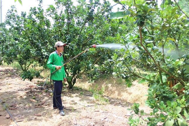 Nâng cao giá trị nông sản không phải chỉ bằng nhà màng hay ống tưới nhỏ giọt - Ảnh 7.