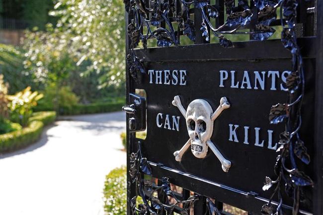 """Có gì bên trong """"Vườn Độc Dược"""", nơi nguy hiểm bậc nhất nước Anh? - Ảnh 3."""