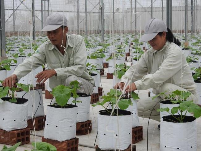 Bắc Ninh phát triển nông nghiệp:  Đột phá nhờ ứng dụng công nghệ cao vào sản xuất - Ảnh 1.