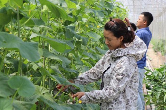 Bắc Ninh phát triển nông nghiệp:  Đột phá nhờ ứng dụng công nghệ cao vào sản xuất - Ảnh 2.
