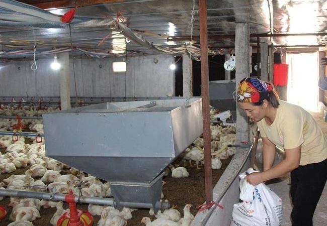 """Giá gia cầm hôm nay 6/12: Giá gà công nghiệp ngấp nghé """"đầu 3"""" - Ảnh 1."""