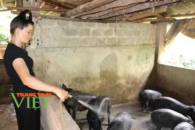 Hiệu quả phong trào nông dân thi đua sản xuất, kinh doanh giỏi ở Thuận Châu - Ảnh 6.