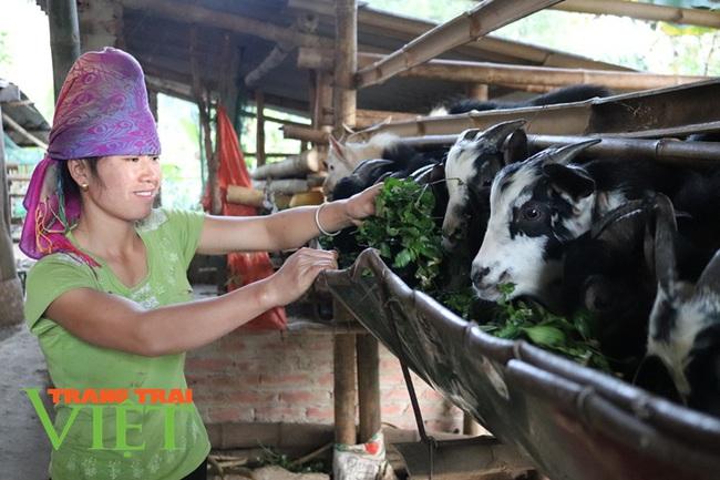 Hiệu quả phong trào nông dân thi đua sản xuất, kinh doanh giỏi ở Thuận Châu - Ảnh 2.