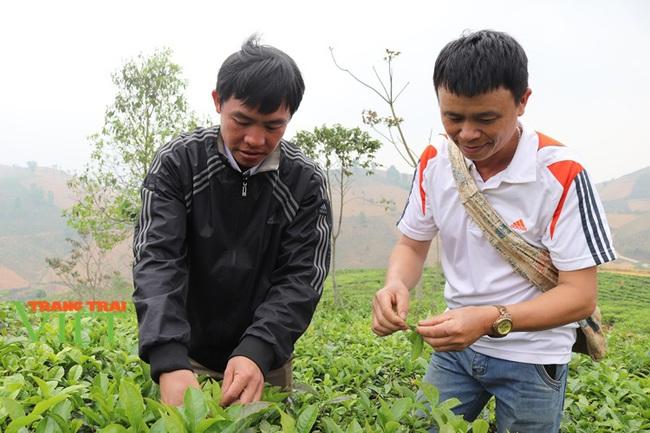 Hiệu quả phong trào nông dân thi đua sản xuất, kinh doanh giỏi ở Thuận Châu - Ảnh 4.