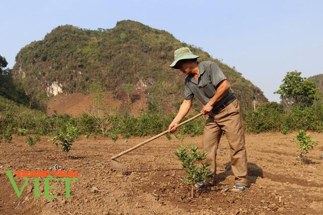 Hiệu quả phong trào nông dân thi đua sản xuất, kinh doanh giỏi ở Thuận Châu - Ảnh 5.