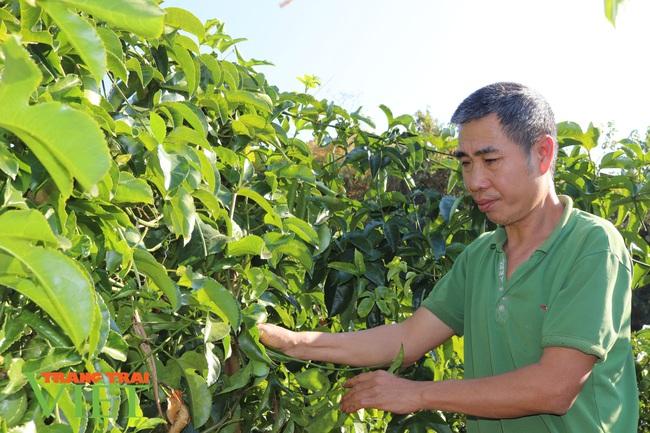 Năm mới, nói chuyện Nông thôn mới ở Thuận Châu - Ảnh 2.