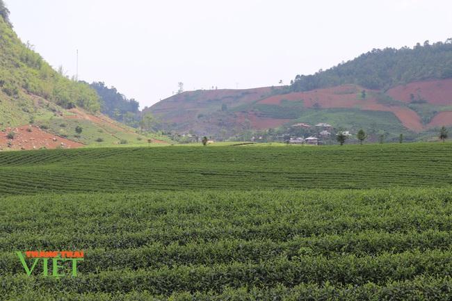 Năm mới, nói chuyện Nông thôn mới ở Thuận Châu - Ảnh 1.