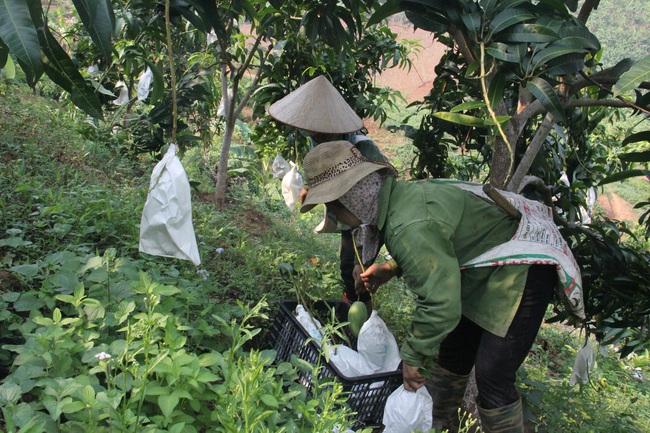 Về xã nông thôn mới xem những nông dân vượt khó làm giàu. - Ảnh 3.