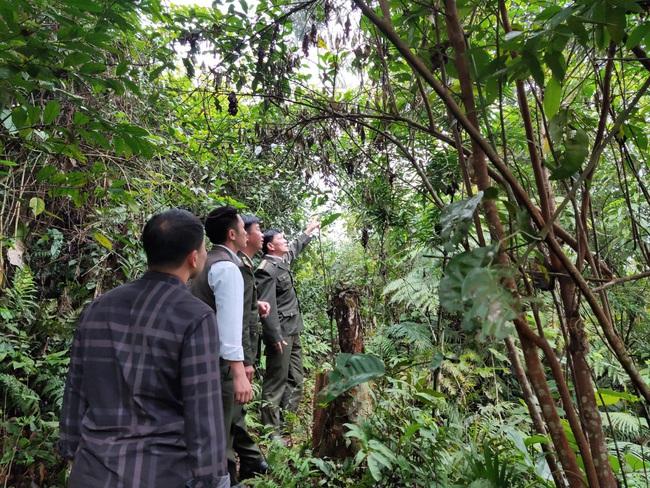 Vân Hồ chủ động phòng cháy, chữa cháy rừng mùa hanh khô - Ảnh 1.