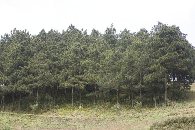 Vân Hồ chủ động phòng cháy, chữa cháy rừng mùa hanh khô - Ảnh 4.