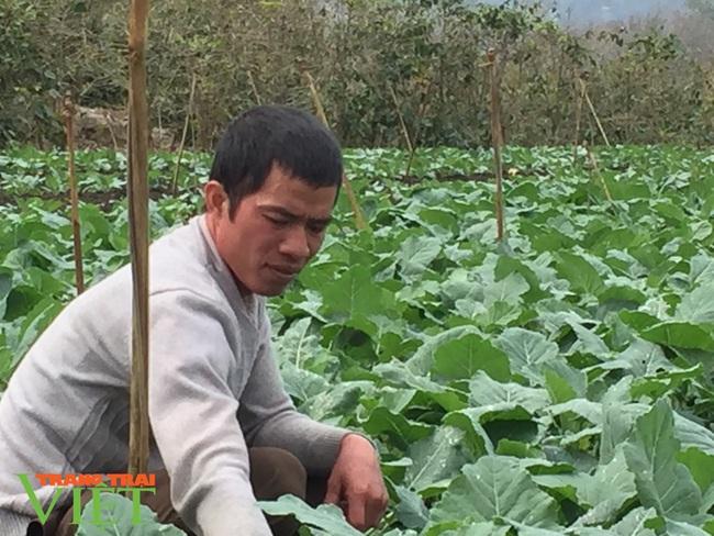 Nông dân giỏi Sơn La- làm giàu nhờ trồng rau sạch  - Ảnh 1.