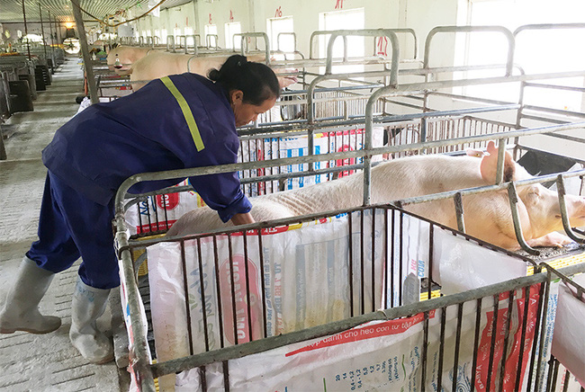 Quảng Ninh đẩy mạnh thu hút đầu tư trong chăn nuôi - Ảnh 2.