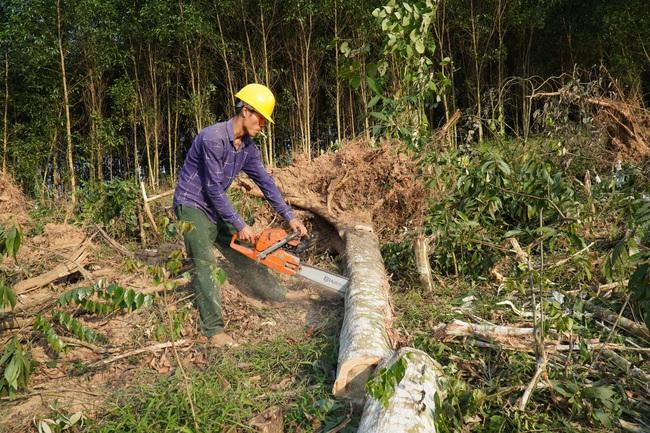 Quần quật chặt cưa, khuân vác tấn gỗ/ngày mới thu được 160.000 đồng - Ảnh 1.