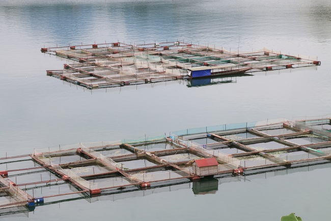 Hội Nông dân Quỳnh Nhai phát triển các mô hình kinh tế hiệu quả - Ảnh 1.
