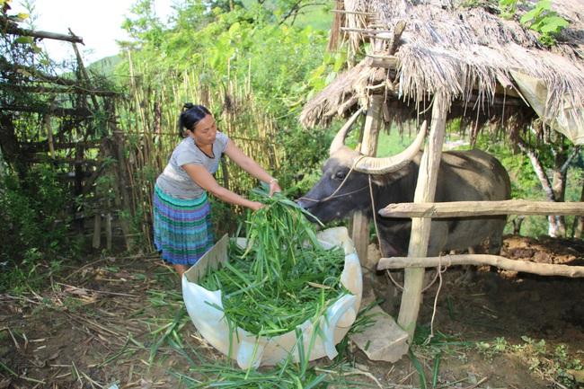 Nỗ lực xây dựng nông thôn mới ở xã khó khăn của Mường La - Ảnh 1.