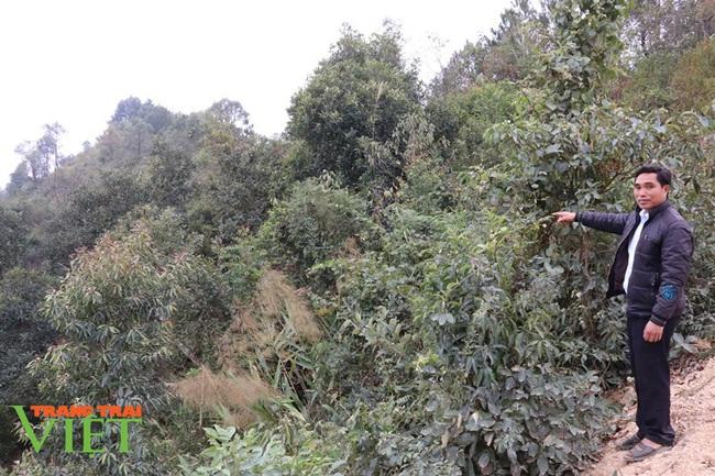 Bản Lầm không lầm trong công tác quản lý, bảo vệ rừng - Ảnh 4.