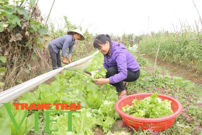 Hoà Bình: Phát triển nông nghiệp thông minh và sản xuất an toàn theo chuỗi - Ảnh 2.