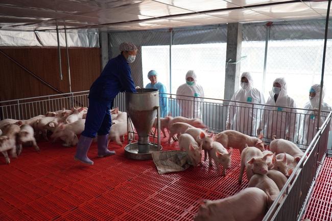 Đưa giá lợn xuống 60.000 đồng/kg vào quý III/2020 - Ảnh 1.